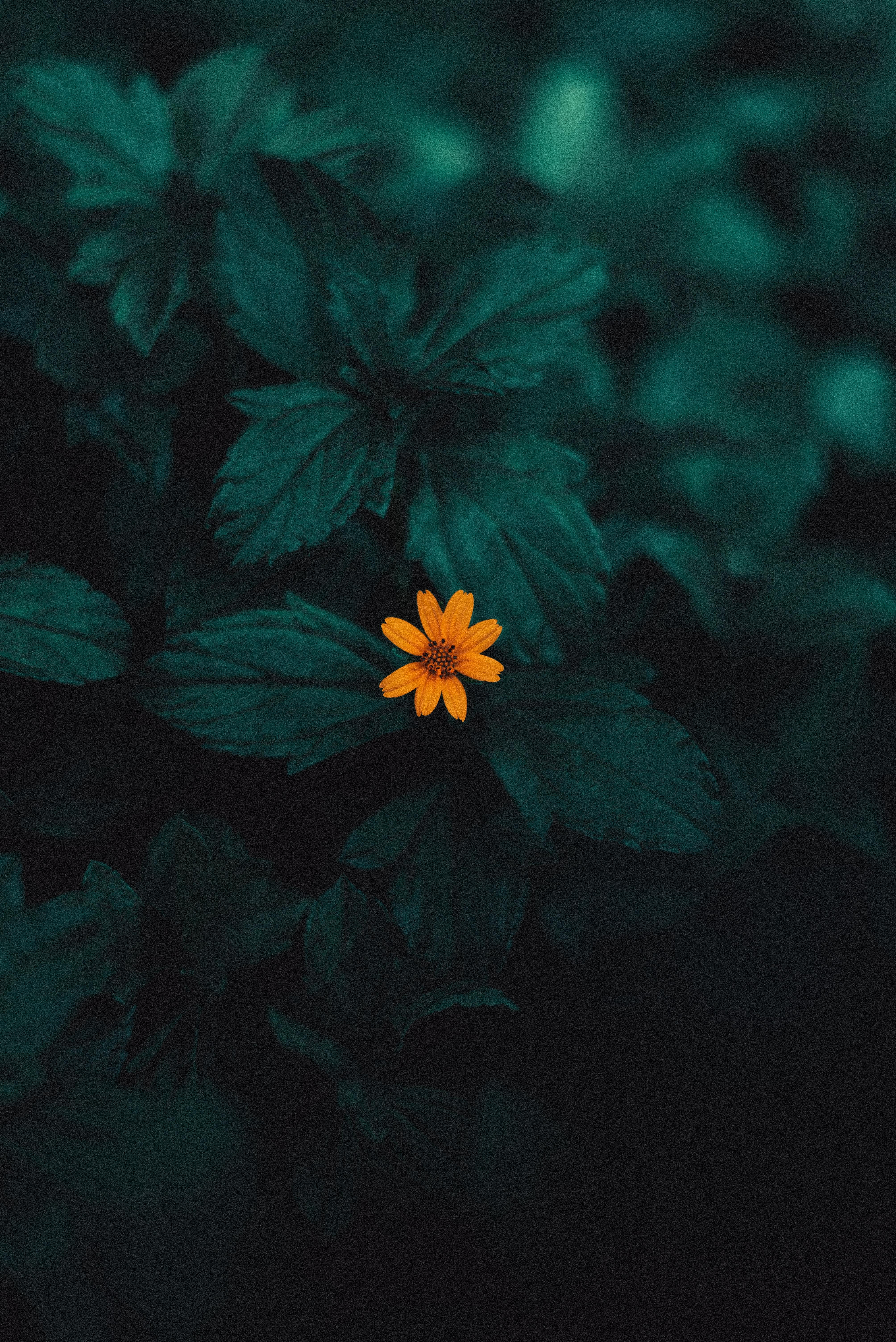 136833 скачать обои Макро, Цветок, Растение, Желтый - заставки и картинки бесплатно
