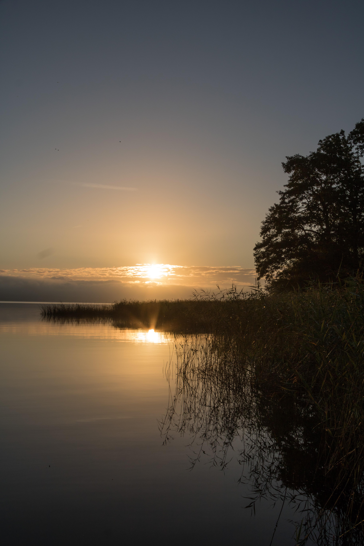 67888 обои 1080x2340 на телефон бесплатно, скачать картинки Пейзаж, Природа, Закат, Озеро, Берег, Дерево, Камыш 1080x2340 на мобильный