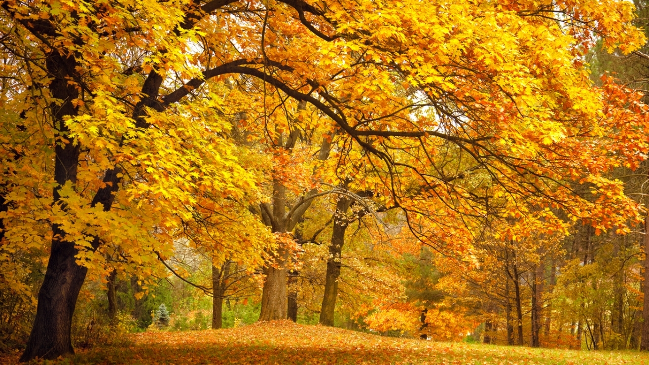 29224 download wallpaper Landscape, Trees, Autumn screensavers and pictures for free