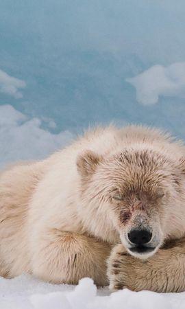 37744 baixar papel de parede Animais, Bears - protetores de tela e imagens gratuitamente