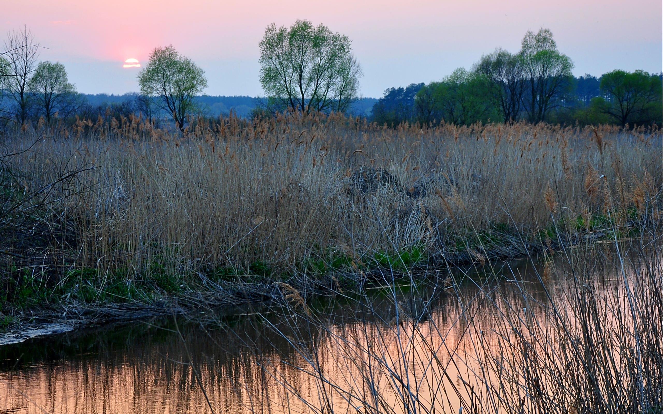 27805 скачать обои Пейзаж, Река, Закат, Трава - заставки и картинки бесплатно