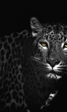 19092 download wallpaper Animals, Leopards screensavers and pictures for free