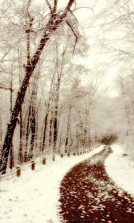 20752 скачать обои Пейзаж, Зима, Деревья, Снег - заставки и картинки бесплатно