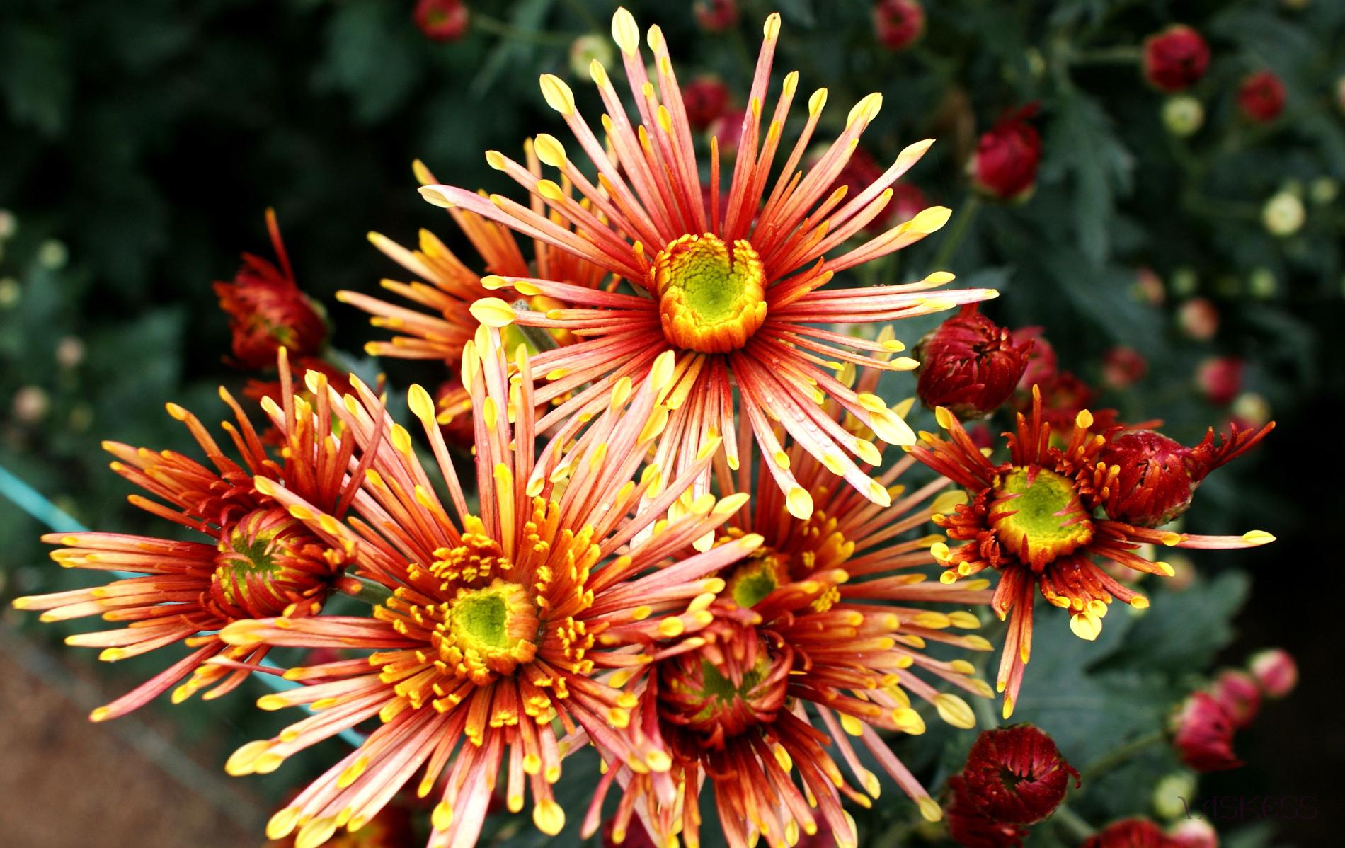 10514 descargar fondo de pantalla Plantas, Flores: protectores de pantalla e imágenes gratis