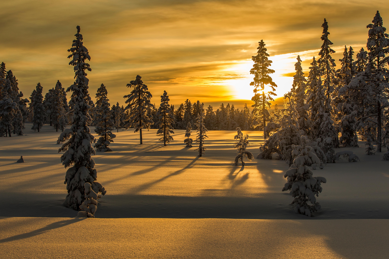 96190 скачать обои Природа, Зима, Снег, Деревья, Закат, Елки - заставки и картинки бесплатно