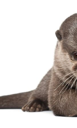 75106 download wallpaper Animals, Otter, Animal, Wool, Fur, Beautiful screensavers and pictures for free