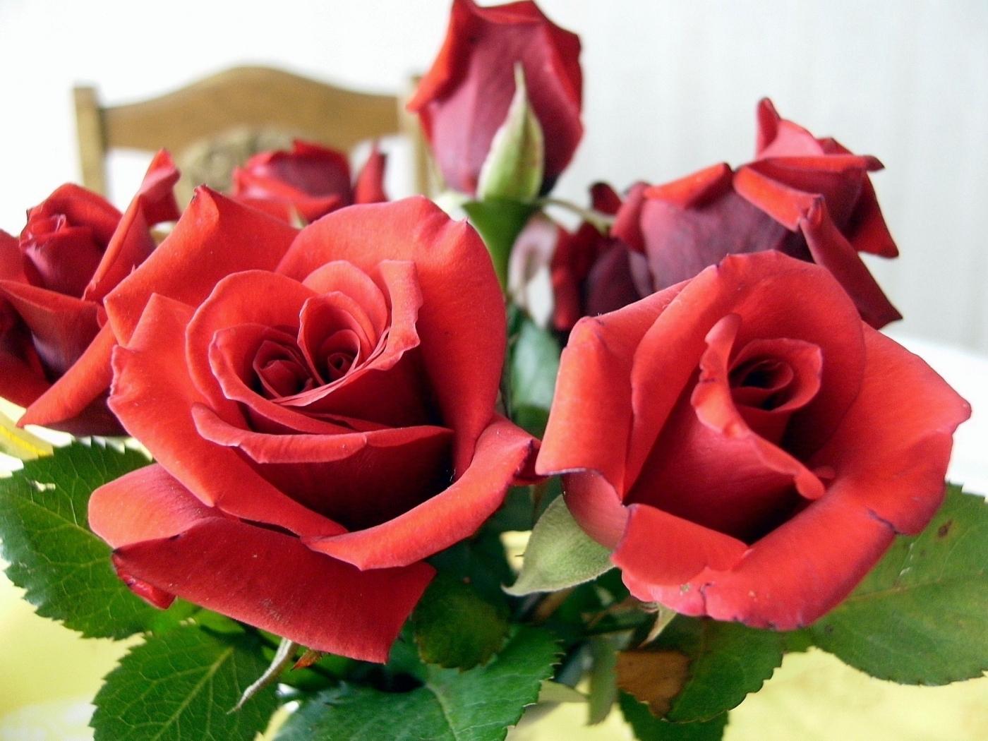 44813 скачать обои Растения, Цветы, Розы - заставки и картинки бесплатно