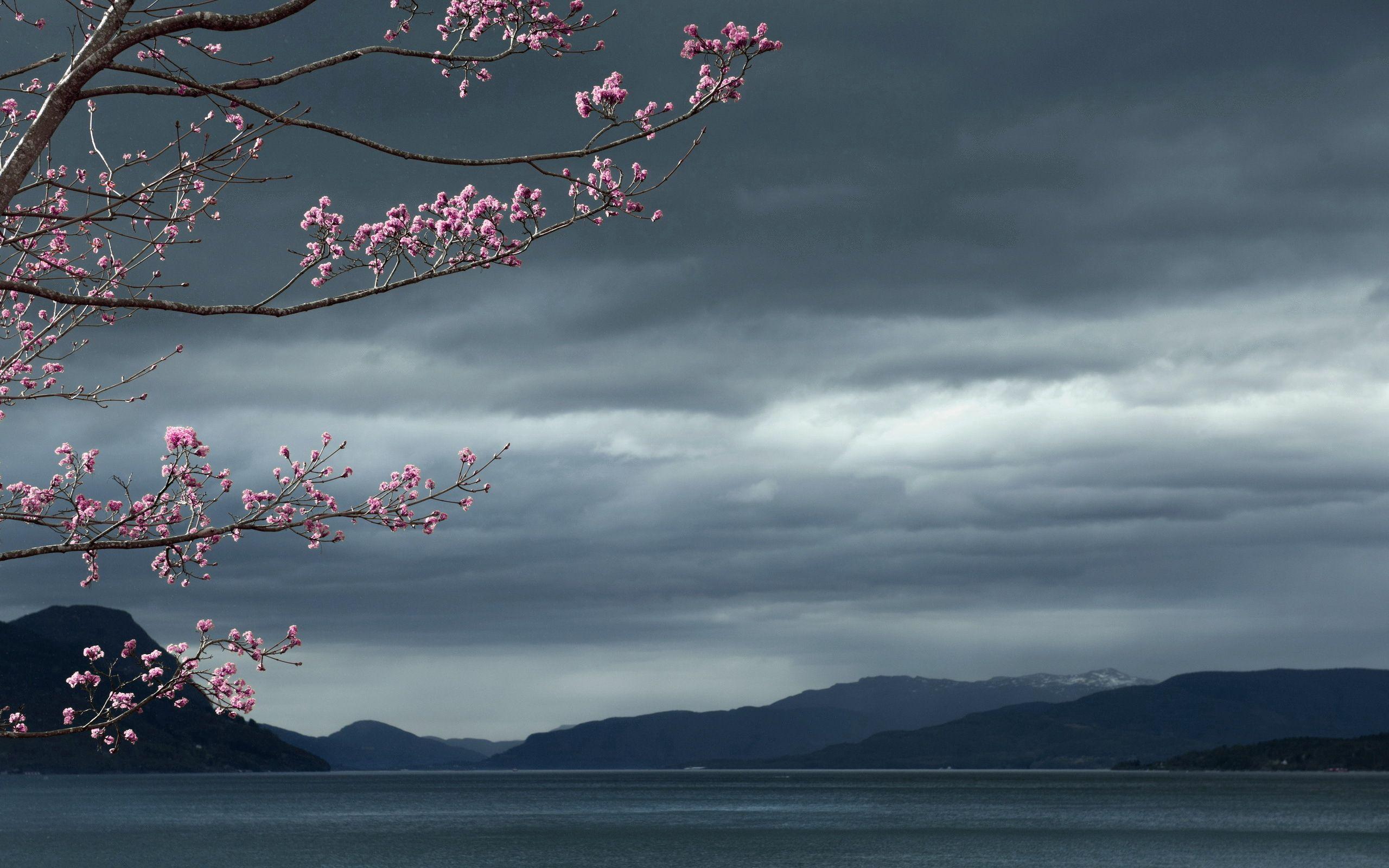 154538壁紙のダウンロード自然, 海, スカイ, 木材, 木, 風景-スクリーンセーバーと写真を無料で