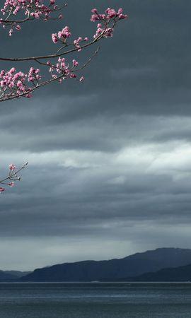154538 скачать обои Природа, Море, Небо, Дерево, Пейзаж - заставки и картинки бесплатно