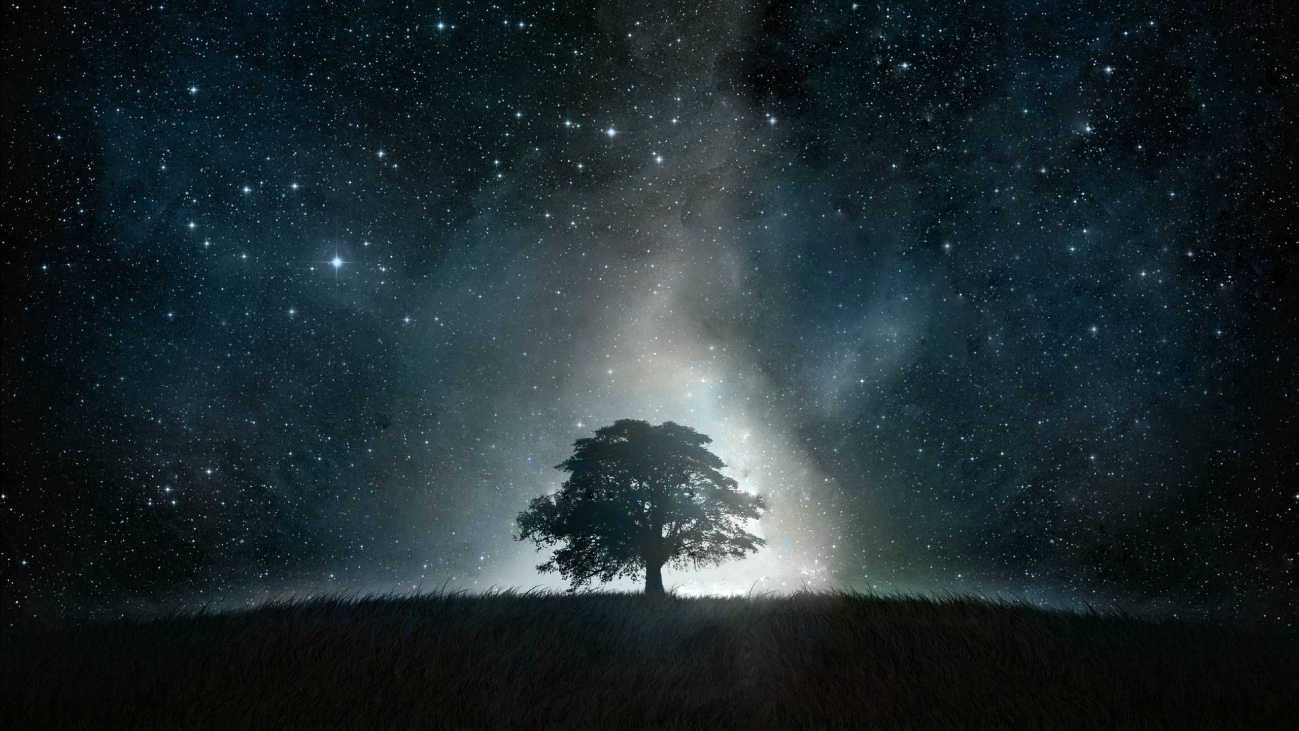 142954 Screensavers and Wallpapers Light for phone. Download Abstract, Wood, Tree, Shine, Light, Night pictures for free