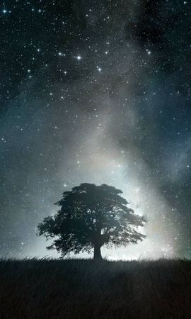142954 скачать обои Абстракция, Дерево, Свет, Ночь - заставки и картинки бесплатно