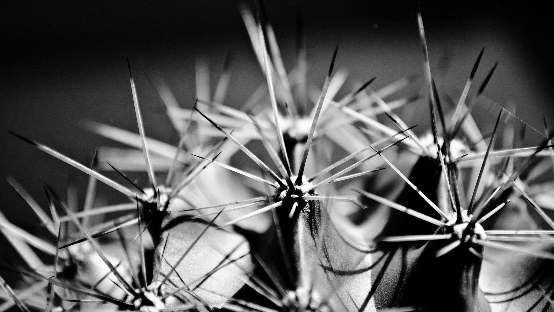 57698 descargar fondo de pantalla Macro, Cactus, Cacto, Espinas, Planta, Bw, Chb: protectores de pantalla e imágenes gratis