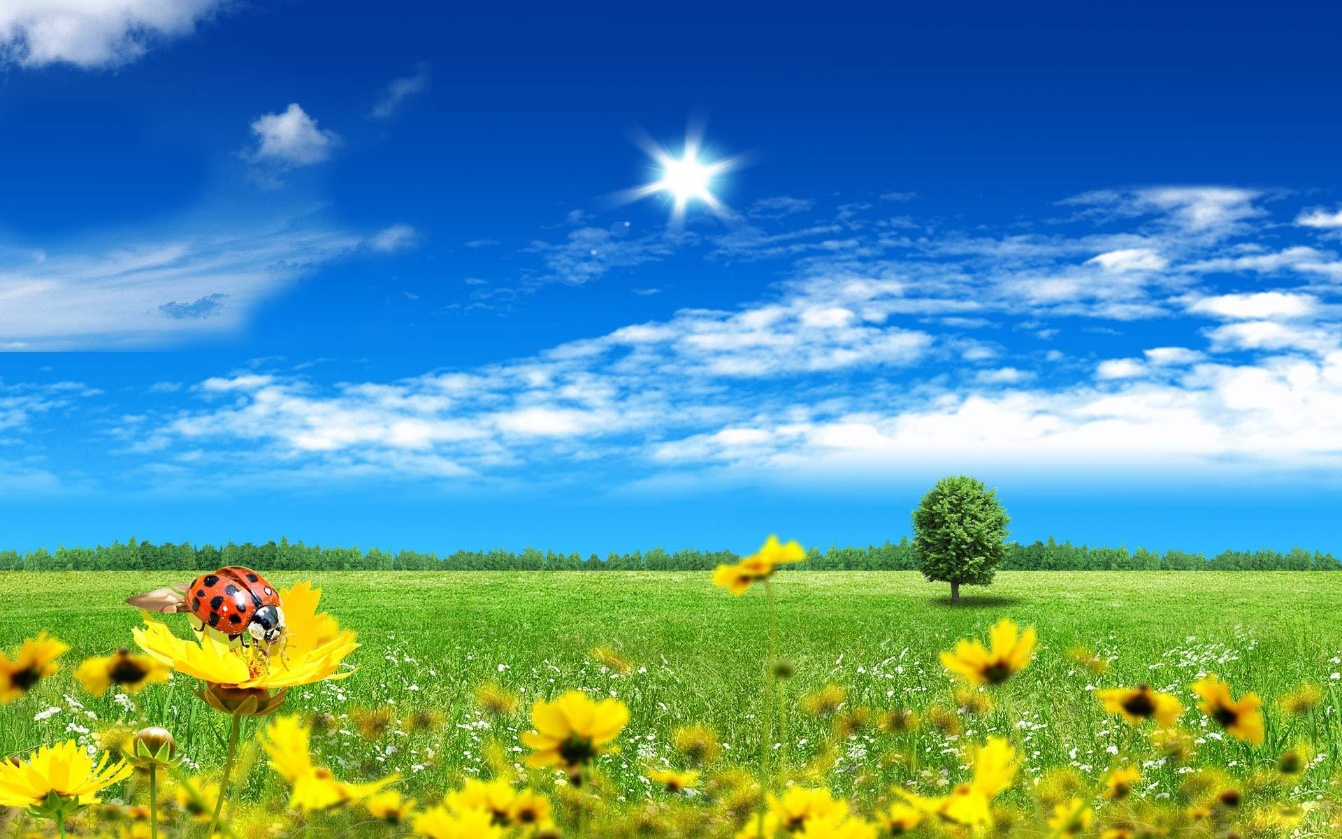 16412 download wallpaper Landscape, Flowers, Ladybugs screensavers and pictures for free