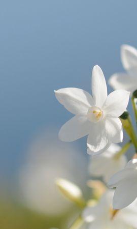 40984 télécharger le fond d'écran Plantes, Fleurs - économiseurs d'écran et images gratuitement