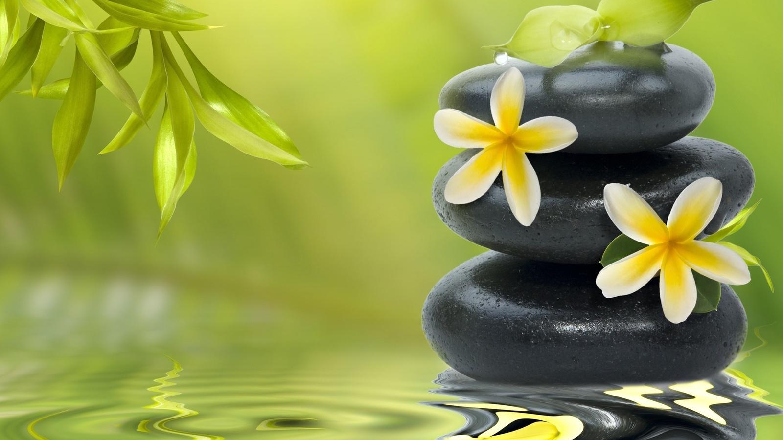 21409 скачать обои Растения, Цветы, Вода, Фон, Камни, Капли - заставки и картинки бесплатно