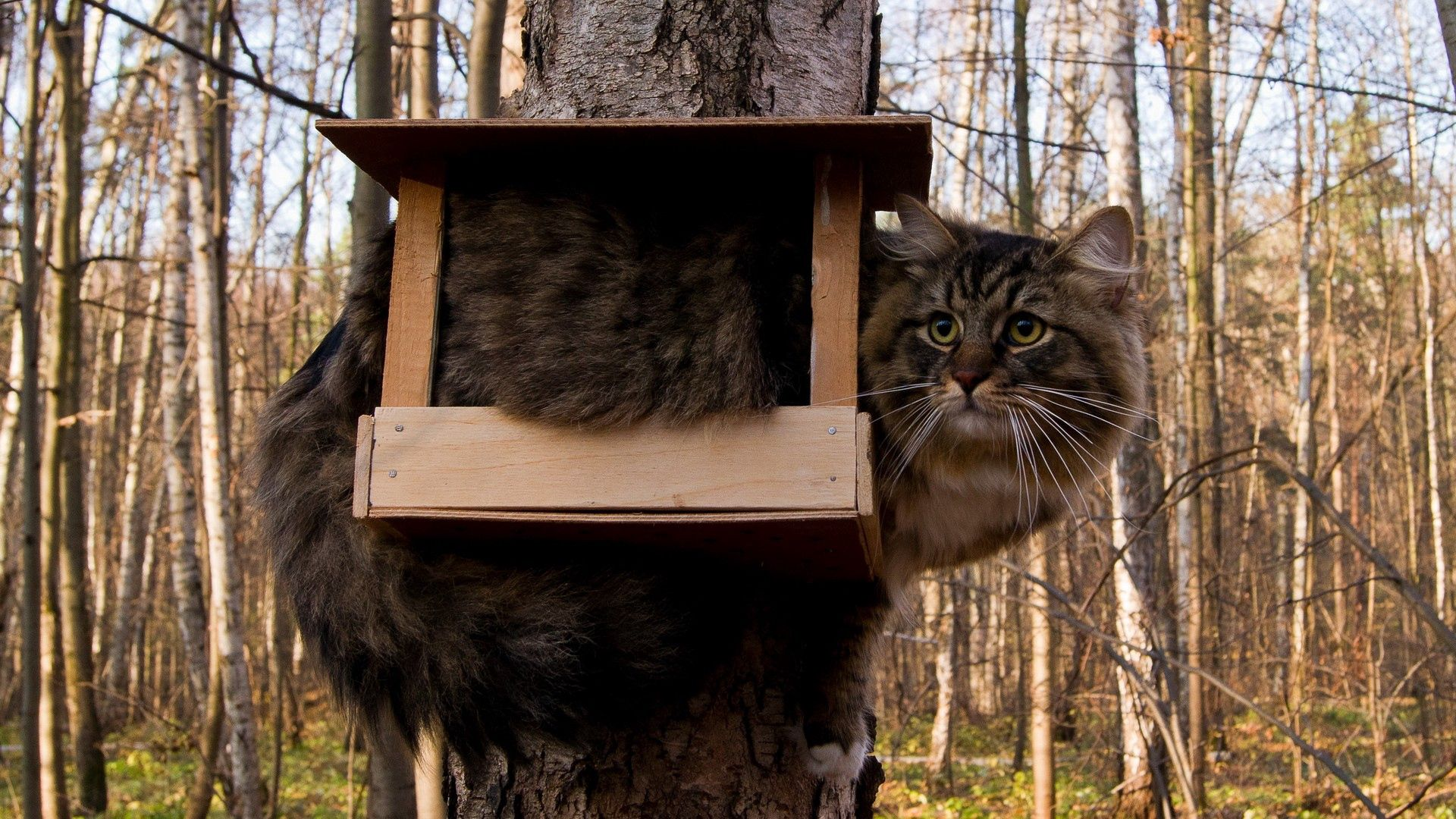 87181 download wallpaper Animals, Cat, Birdhouse, Fluffy, Funny, Situation screensavers and pictures for free