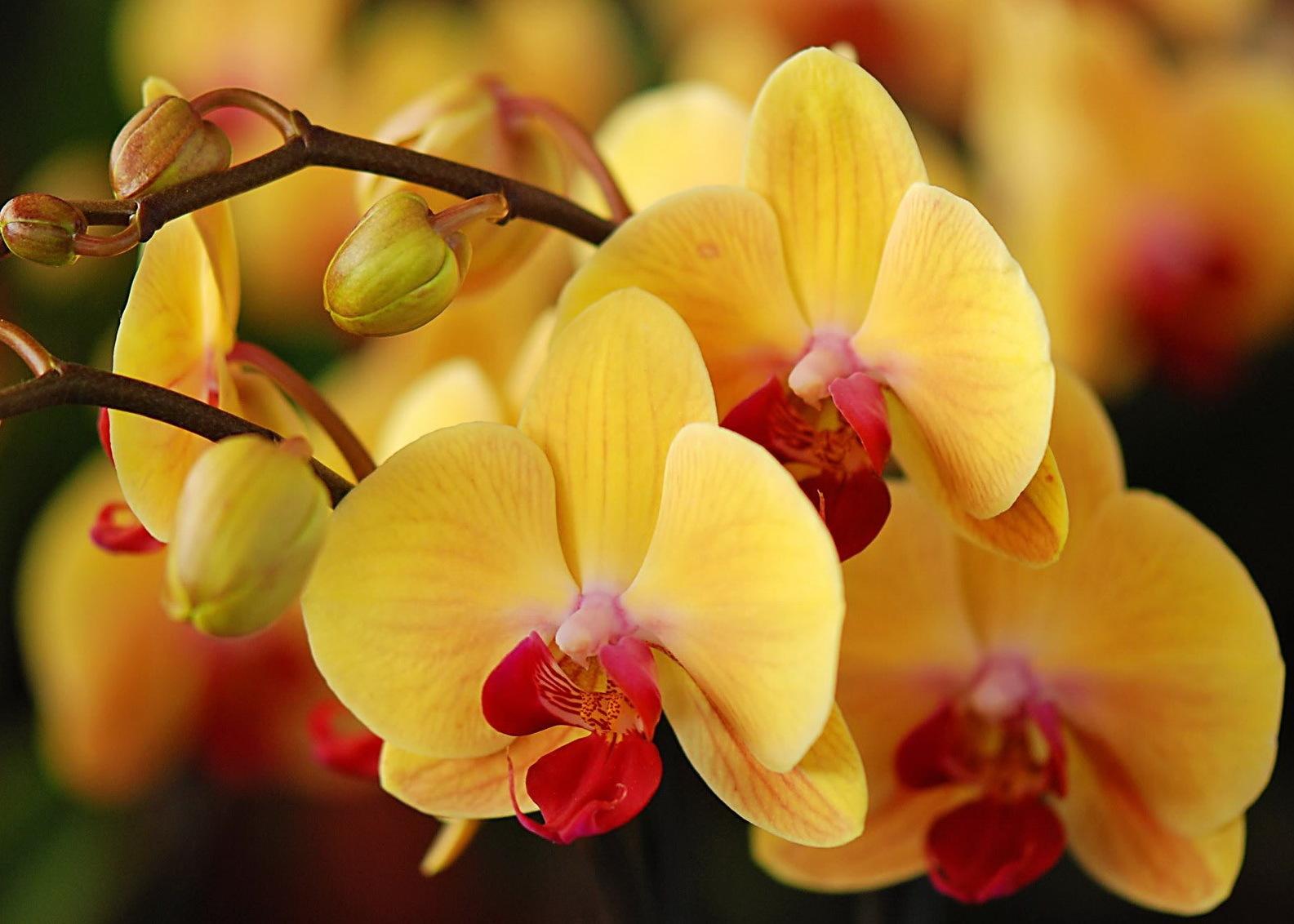 40866 скачать обои Растения, Цветы - заставки и картинки бесплатно