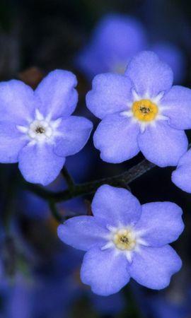 46367 descargar fondo de pantalla Plantas, Flores: protectores de pantalla e imágenes gratis