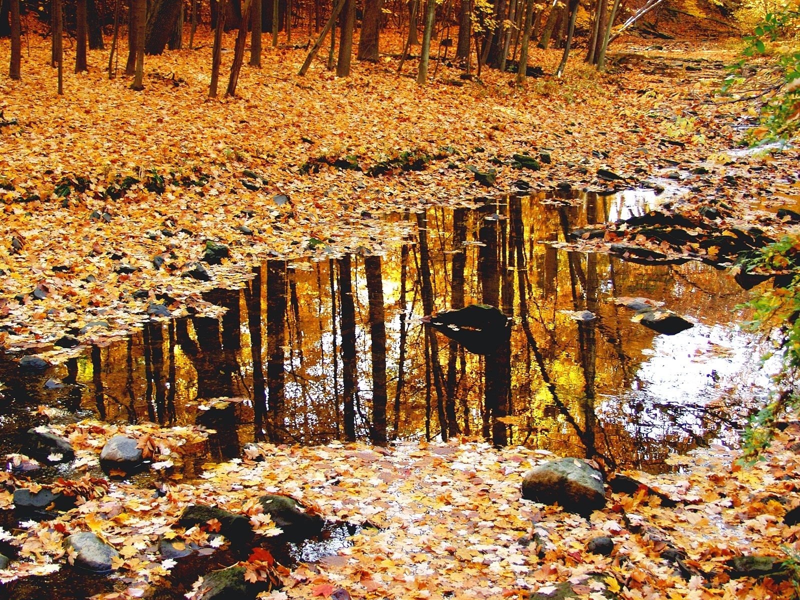 125 download wallpaper Landscape, Nature, Trees, Autumn, Leaves screensavers and pictures for free