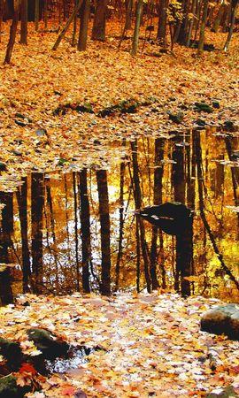 125 скачать обои Пейзаж, Природа, Деревья, Осень, Листья - заставки и картинки бесплатно
