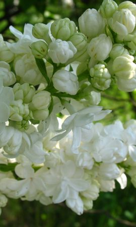 7399 скачать обои Растения, Цветы - заставки и картинки бесплатно