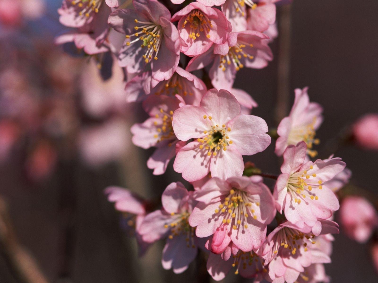 2058 скачать обои Растения, Цветы - заставки и картинки бесплатно
