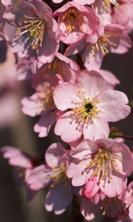 2058 descargar fondo de pantalla Plantas, Flores: protectores de pantalla e imágenes gratis