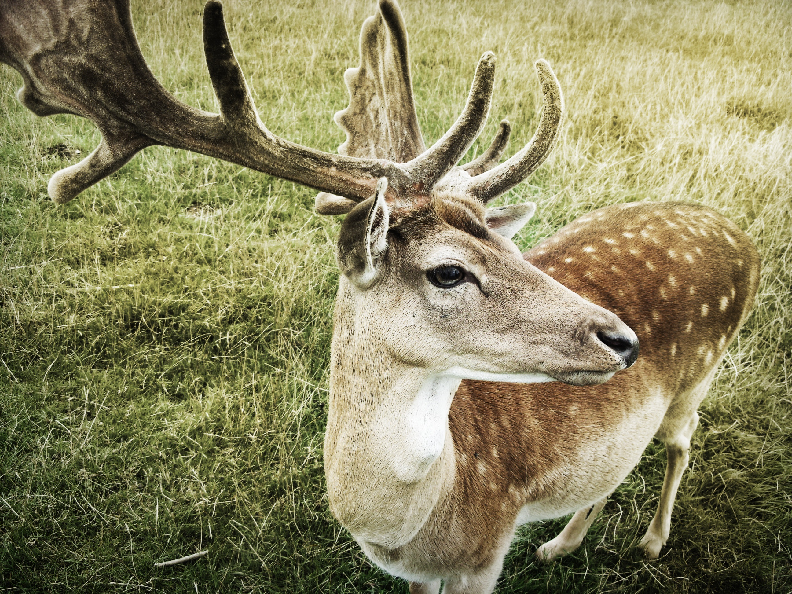 76104 download wallpaper Animals, Deer, Muzzle, Horns screensavers and pictures for free