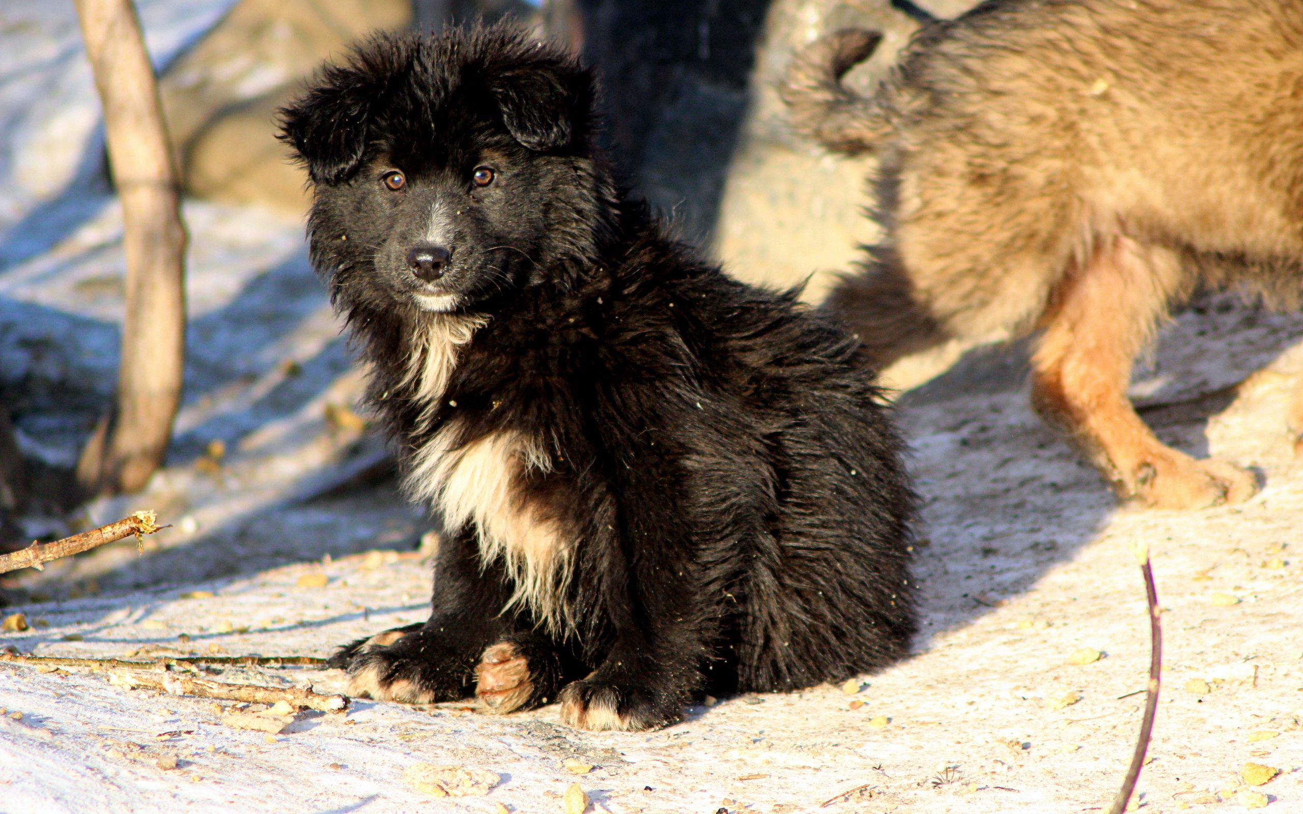 116627 download wallpaper Animals, Puppies, Dogs, Couple, Pair, Snow screensavers and pictures for free
