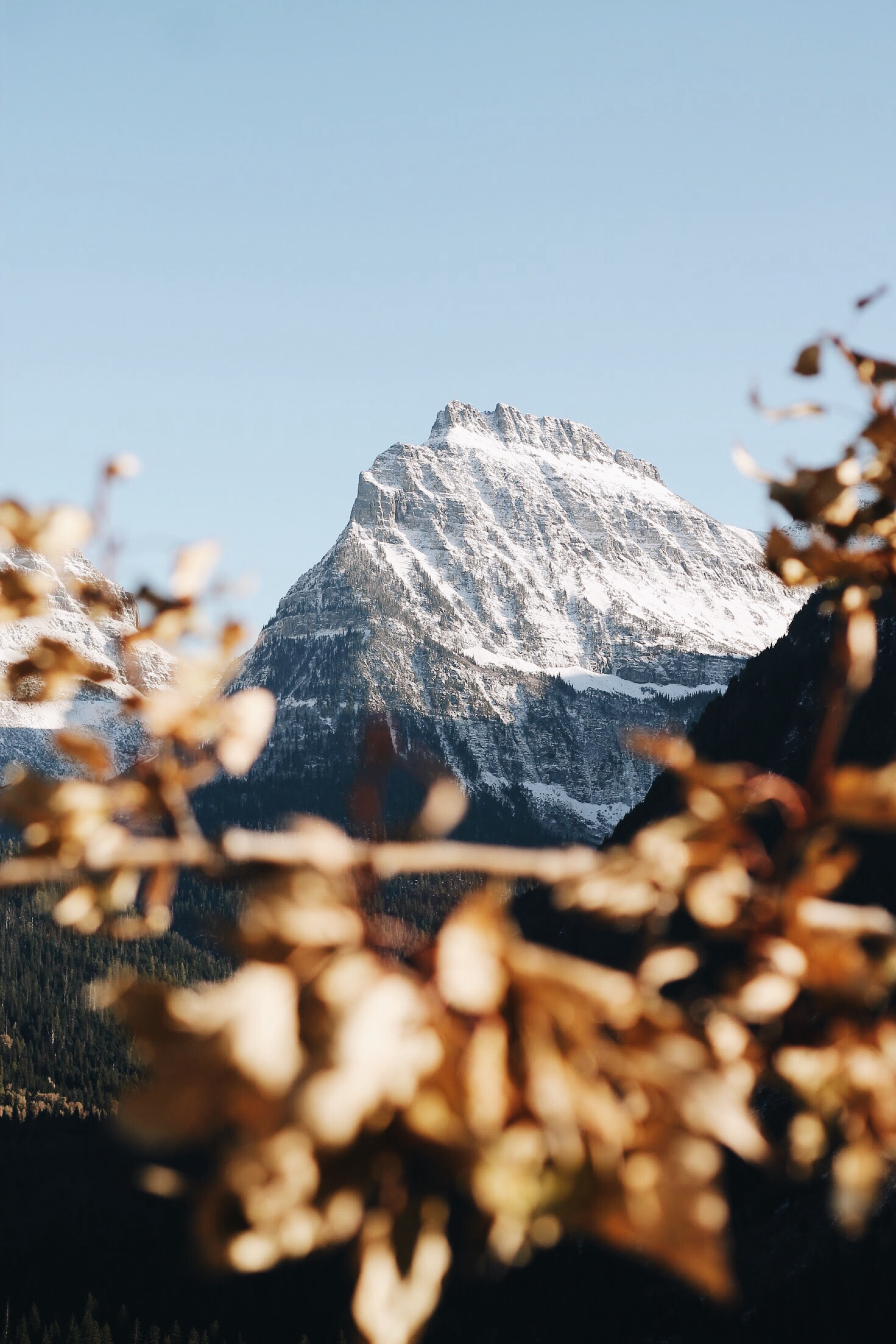 103060 download wallpaper Nature, Mountain, Vertex, Top, Snow Covered, Snowbound, Branch, Landscape screensavers and pictures for free