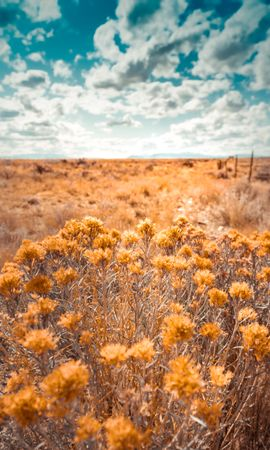 113674 download wallpaper Nature, Plants, Grass, Dry, Field, Wild screensavers and pictures for free