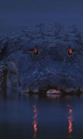 38410 baixar papel de parede Animais, Crocodiles - protetores de tela e imagens gratuitamente
