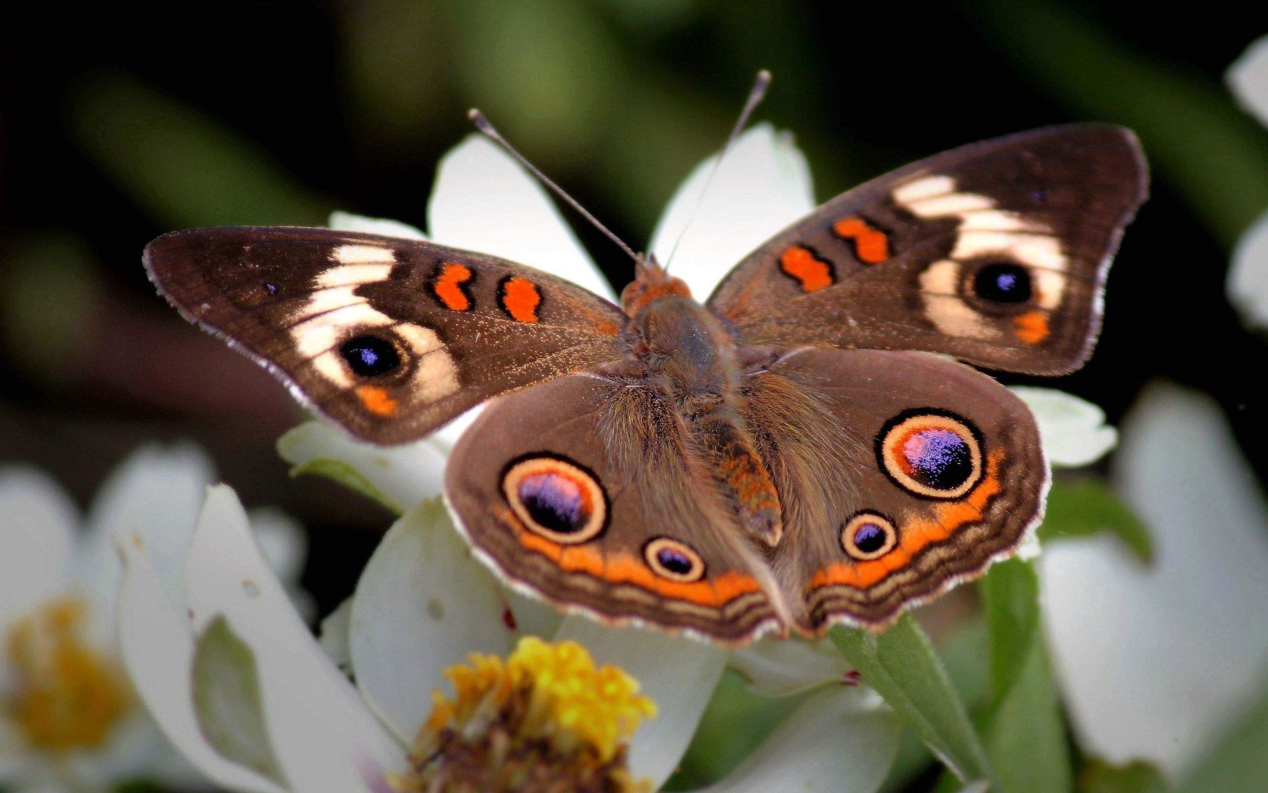 123872 Screensavers and Wallpapers Butterfly for phone. Download Patterns, Flower, Macro, Butterfly, Wings, Wave, Sweep pictures for free