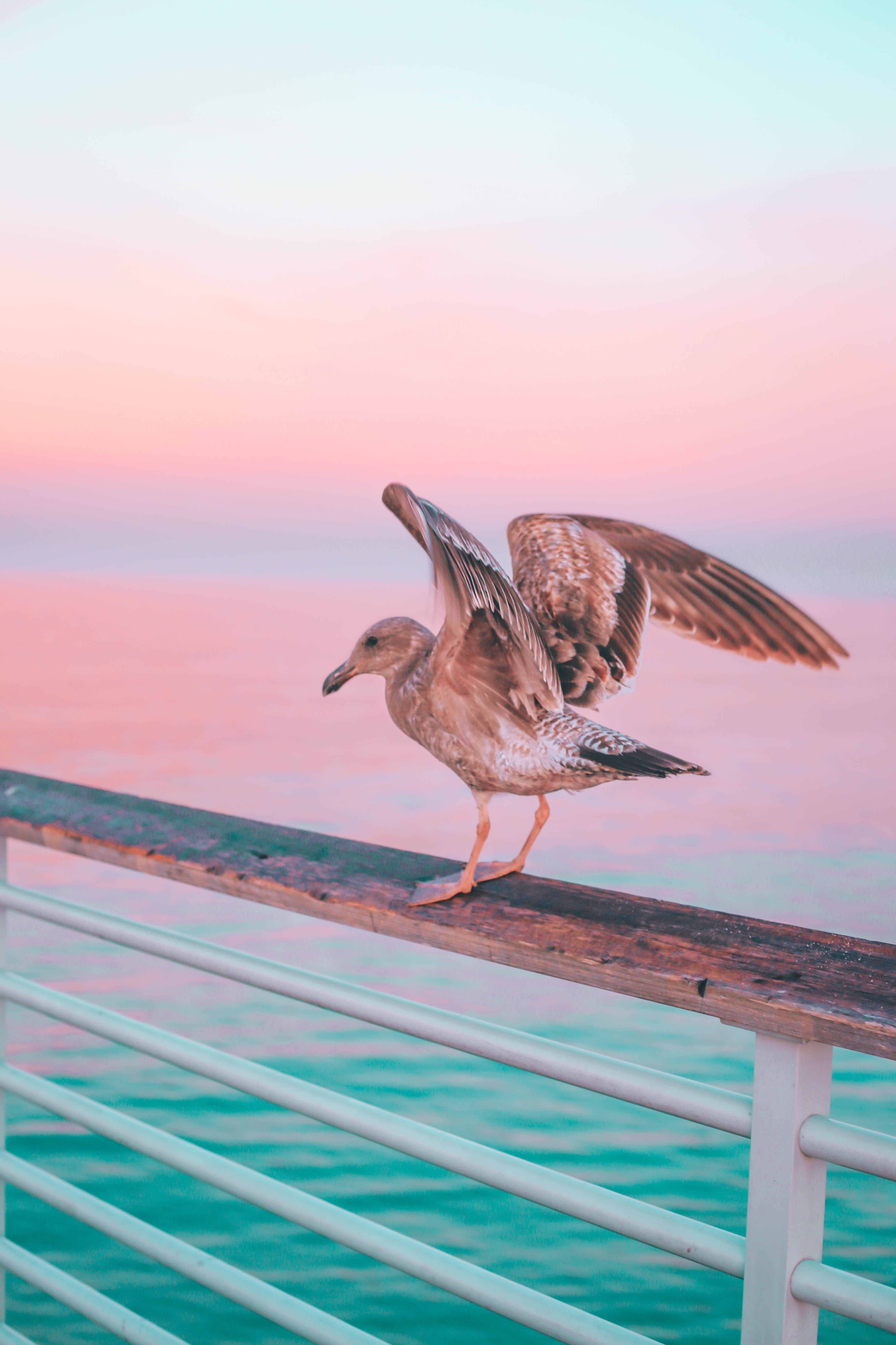 99513 download wallpaper Animals, Gull, Seagull, Bird, Sea, Pink, Pastel, Handrails, Pier screensavers and pictures for free
