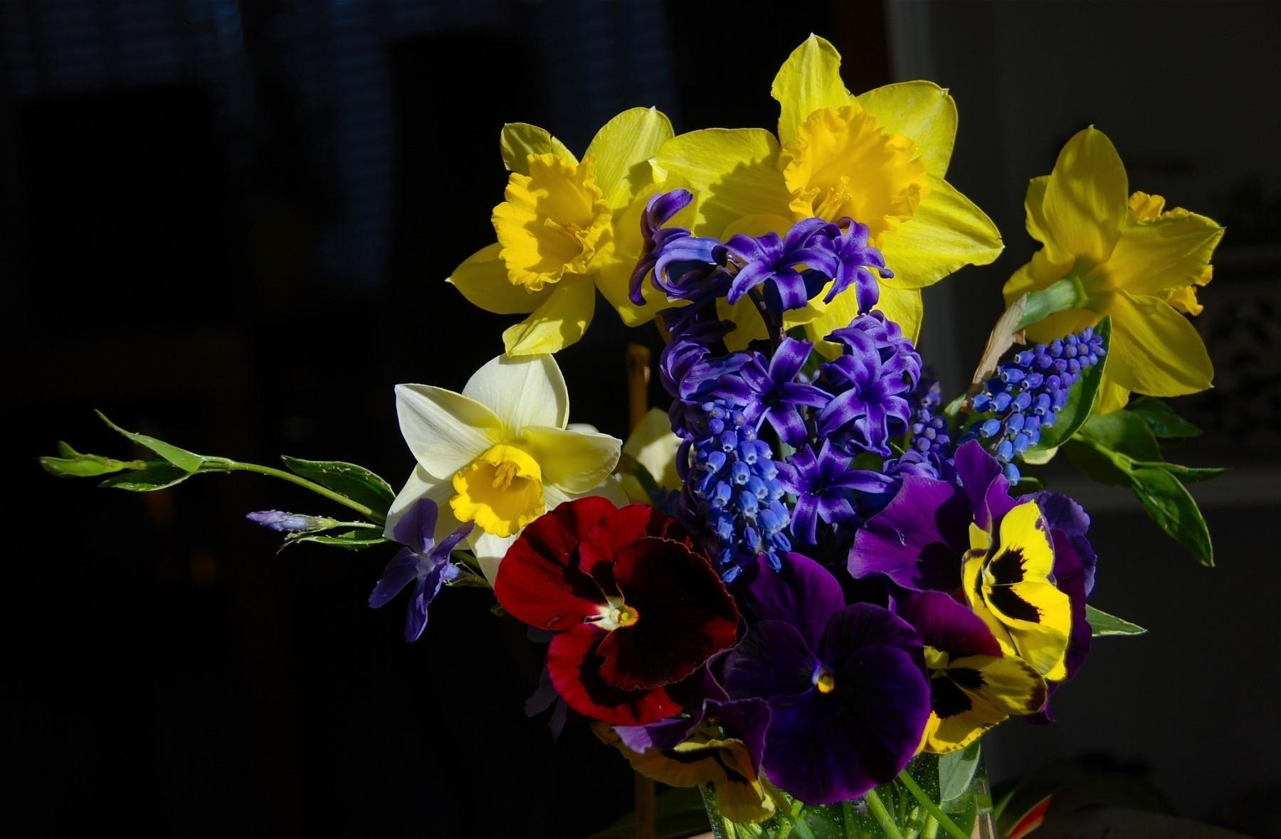 156637 Заставки и Обои Нарциссы на телефон. Скачать Цветы, Анютины Глазки, Нарциссы, Гиацинт, Зелень, Букет, Композиция, Мускари картинки бесплатно