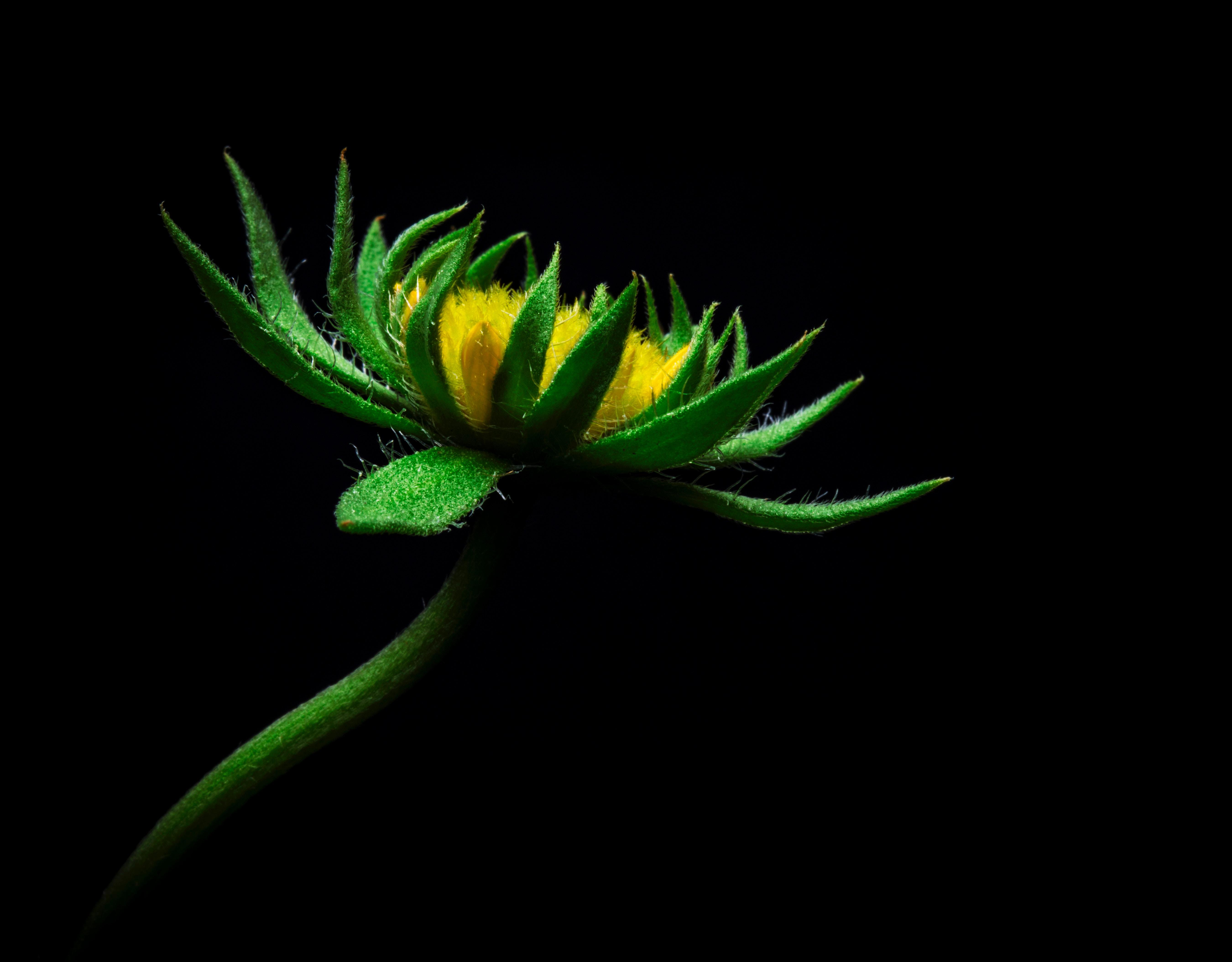 142750 免費下載壁紙 花卉, 花, 向日葵, 人造的 屏保和圖片