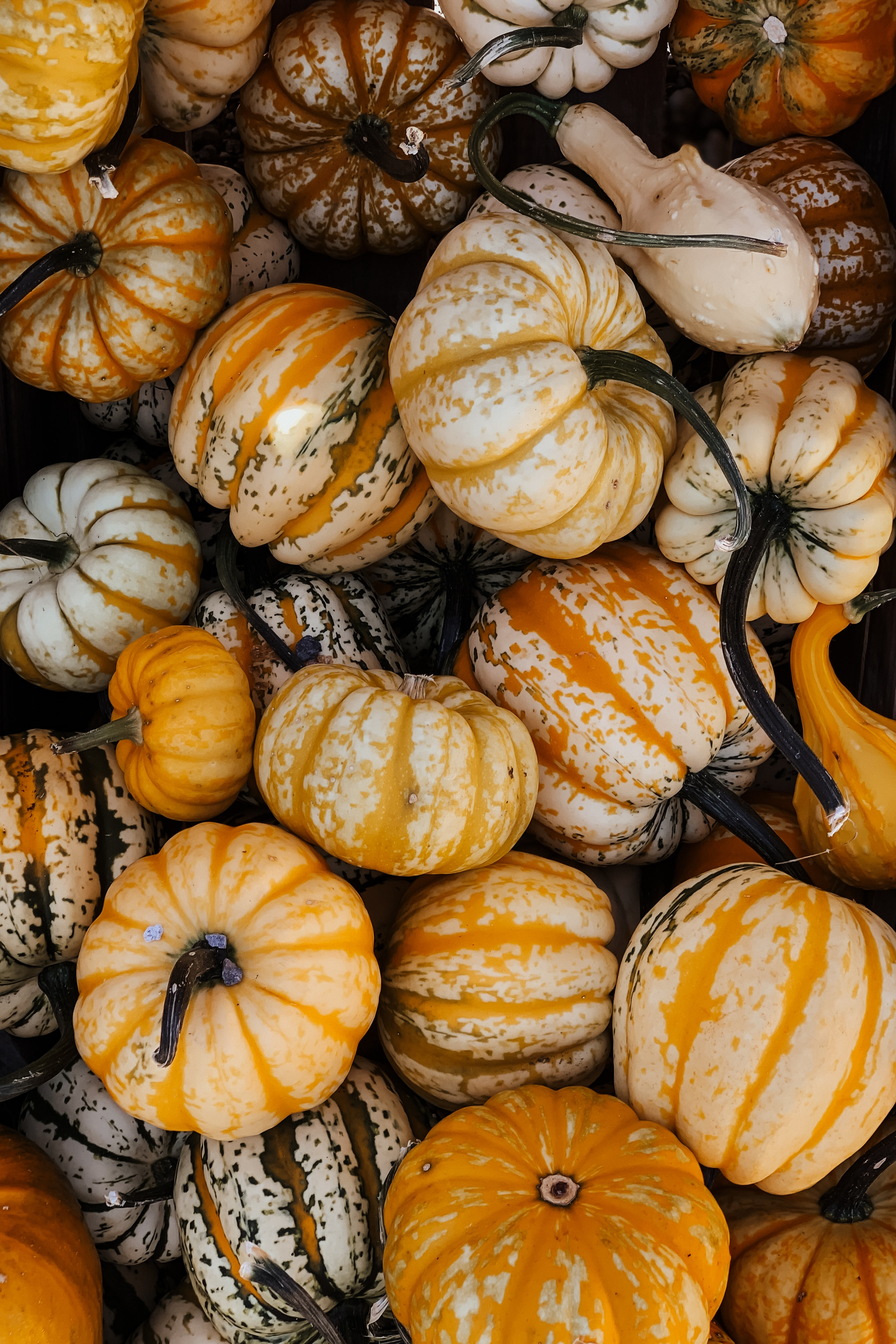 81701 download wallpaper Food, Pumpkin, Vegetable, Autumn, Halloween screensavers and pictures for free