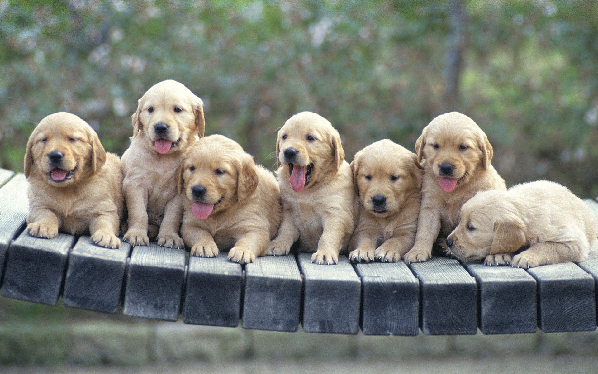 103905 download wallpaper Animals, Puppies, Dogs, Lots Of, Multitude screensavers and pictures for free