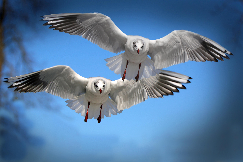 146912 Заставки и Обои Птицы на телефон. Скачать Птицы, Чайки, Животные, Полет, Взмах картинки бесплатно