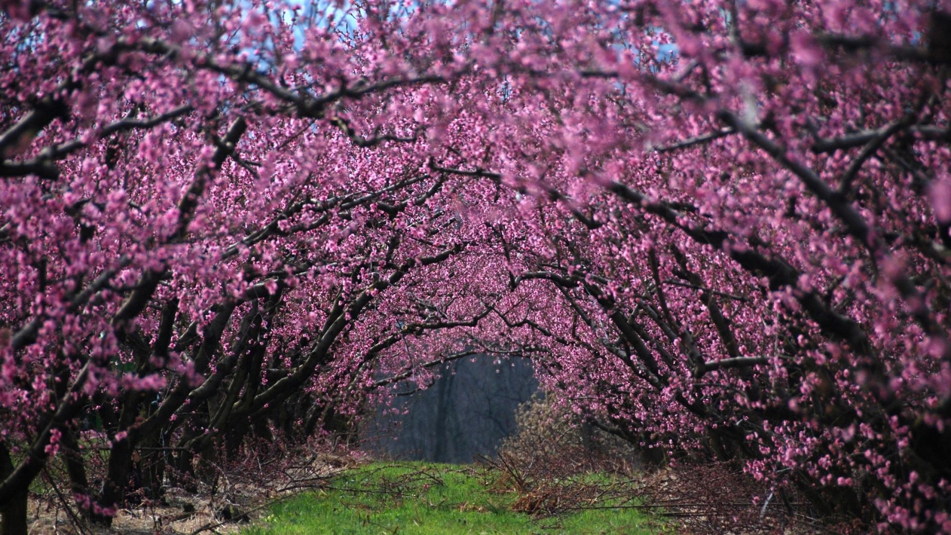 Скачать картинку Цветы, Деревья, Пейзаж, Растения в телефон бесплатно.