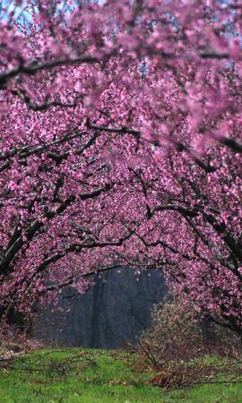 25782 télécharger le fond d'écran Plantes, Paysage, Fleurs, Arbres - économiseurs d'écran et images gratuitement