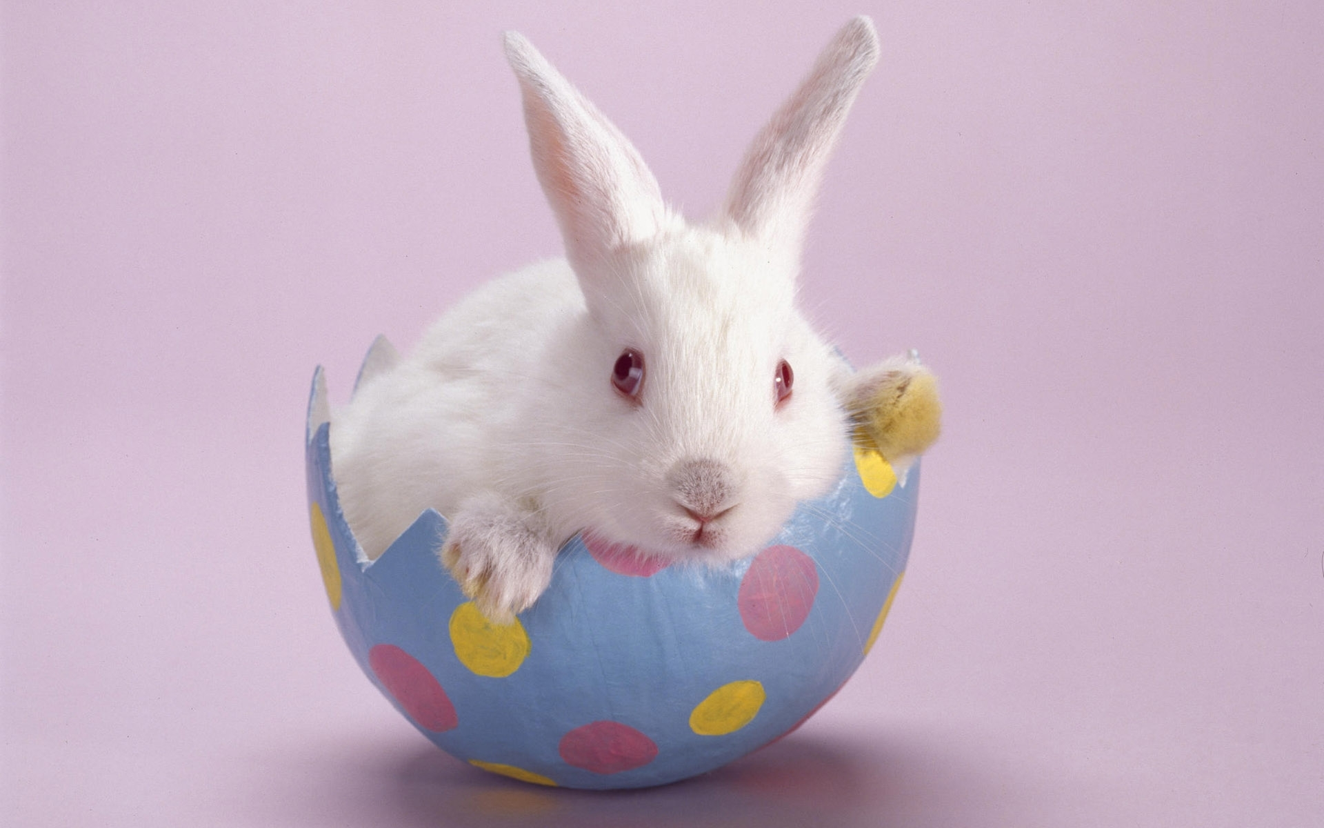 50160 Screensavers and Wallpapers Rabbits for phone. Download Animals, Rabbits pictures for free
