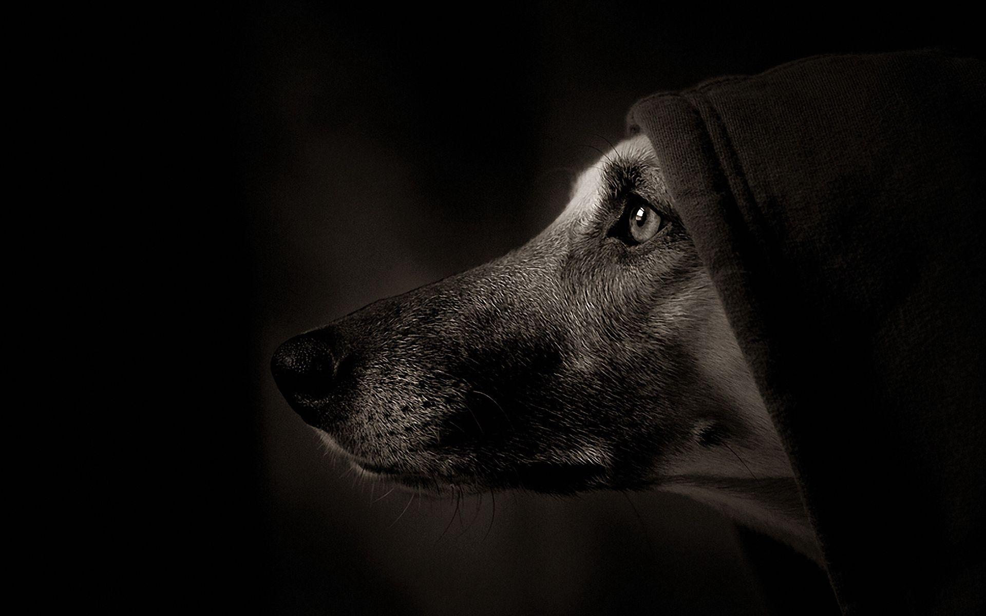 133750 скачать обои Темные, Собака, Морда, Профиль, Тень, Глаза, Капюшон - заставки и картинки бесплатно