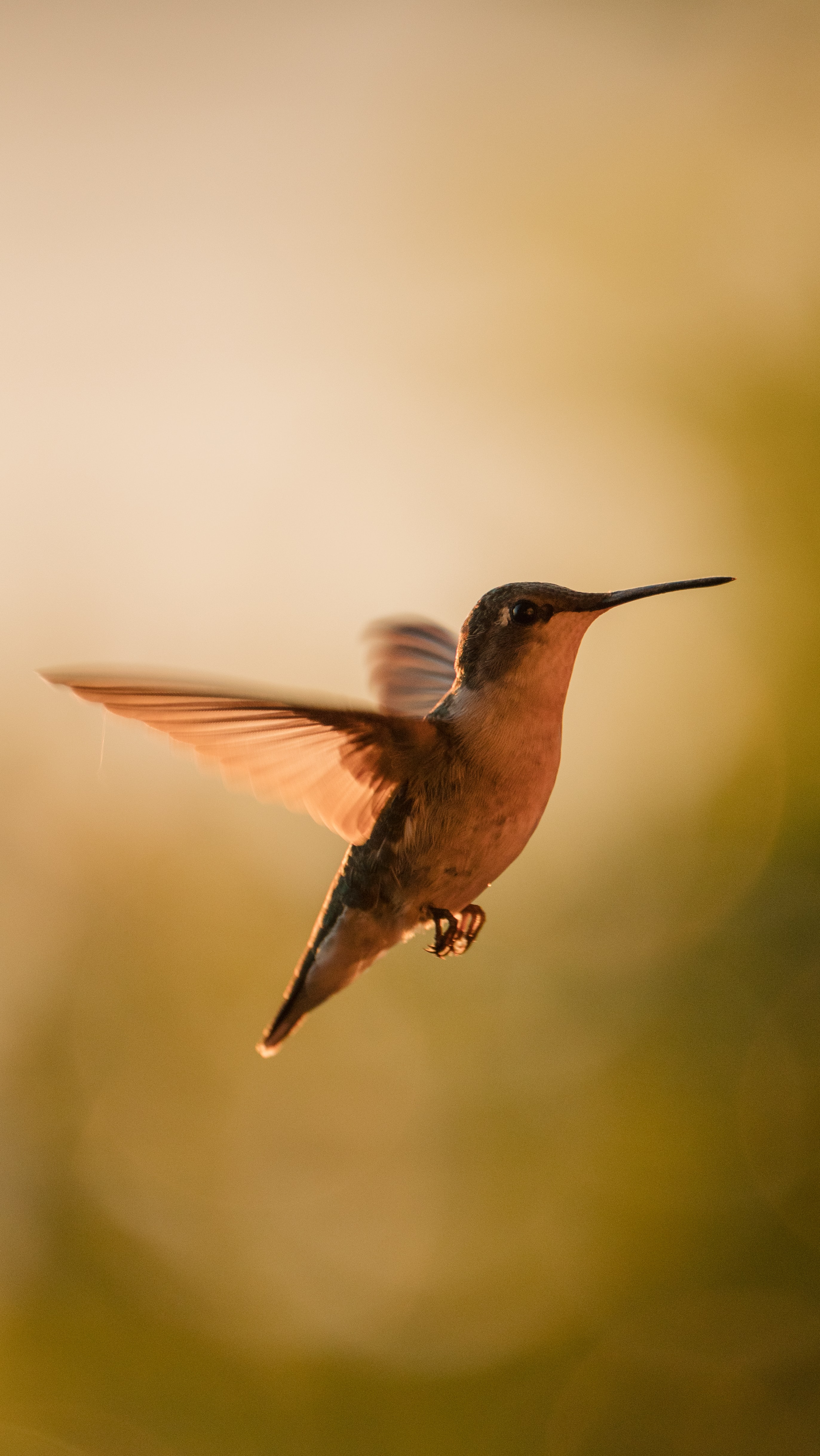 138948 Salvapantallas y fondos de pantalla Animales en tu teléfono. Descarga imágenes de Animales, Colibríes, Pájaro, Alas, Tráfico, Movimiento, Pico gratis