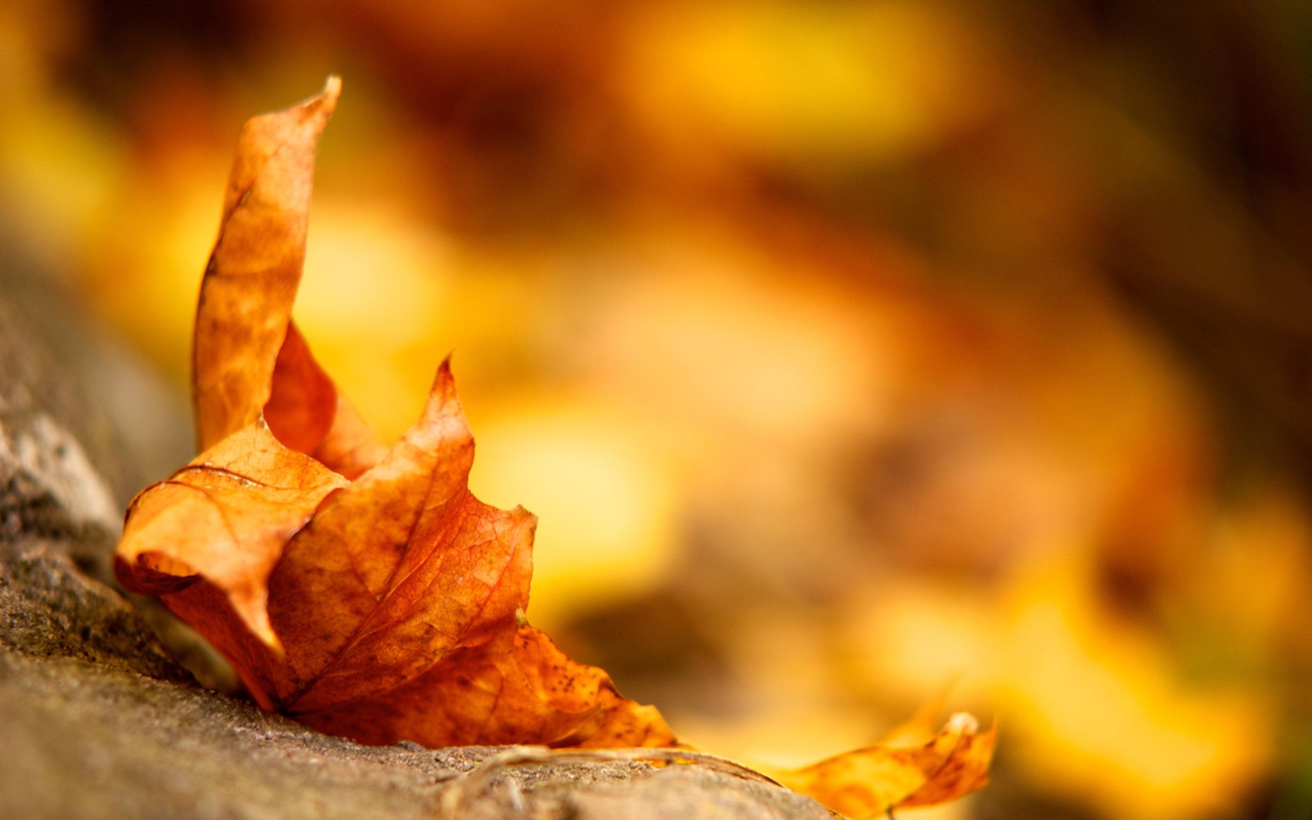 31257 скачать обои Фон, Осень, Листья - заставки и картинки бесплатно