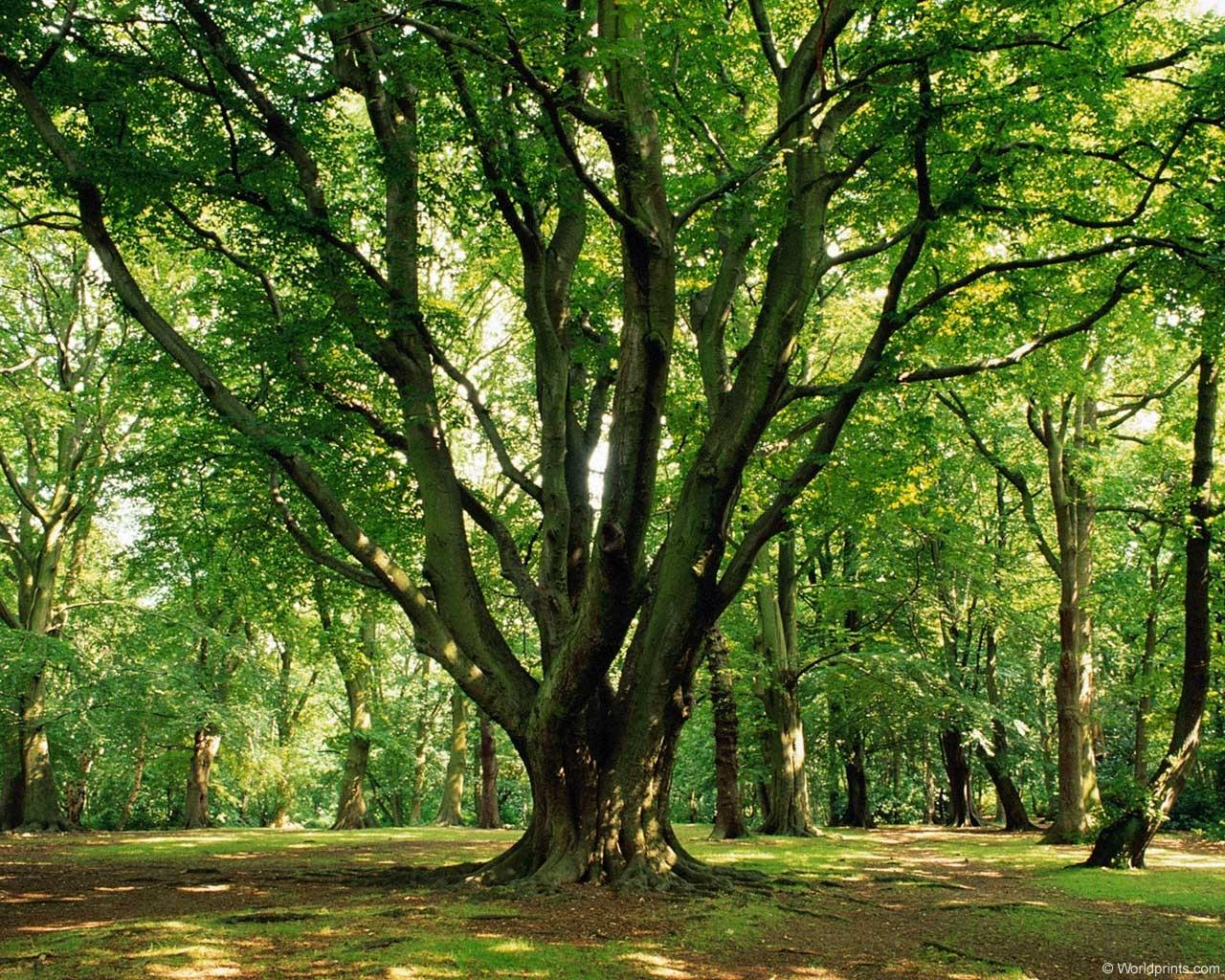 8870 скачать обои Пейзаж, Деревья - заставки и картинки бесплатно