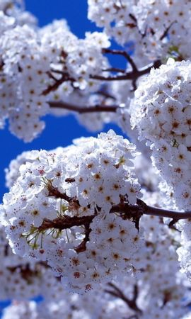 21886 скачать обои Растения, Цветы, Деревья - заставки и картинки бесплатно