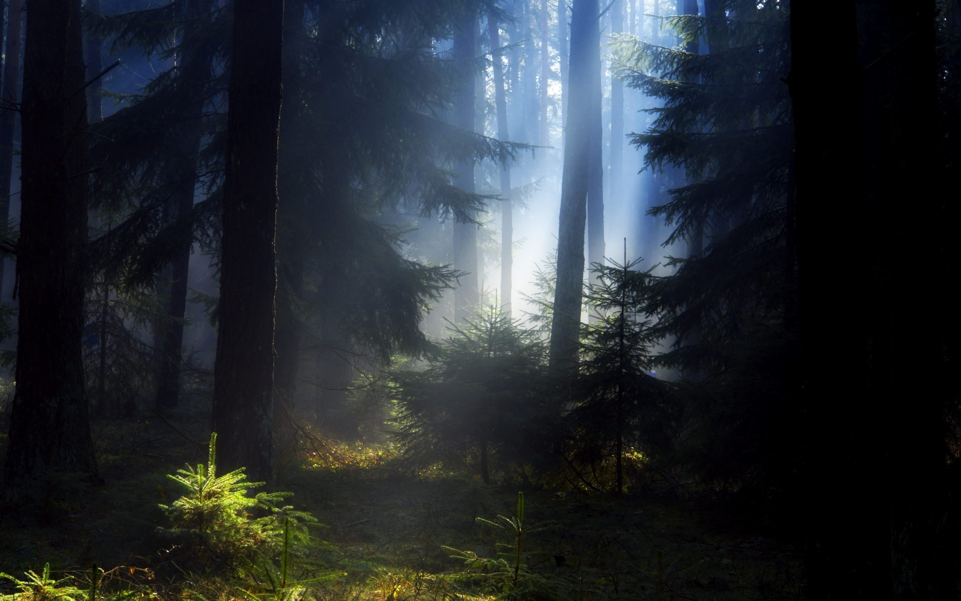 26875 download wallpaper Landscape, Trees, Sun screensavers and pictures for free