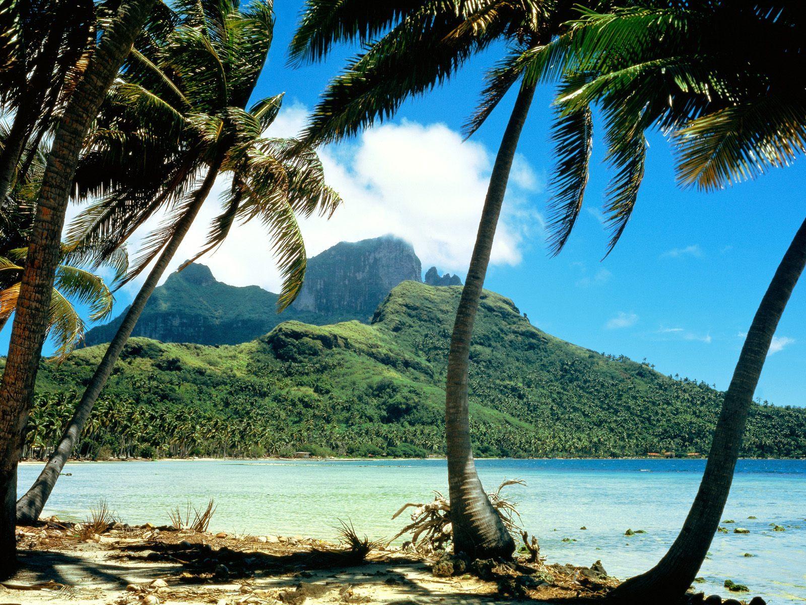 9617 скачать обои Пейзаж, Деревья, Пальмы - заставки и картинки бесплатно