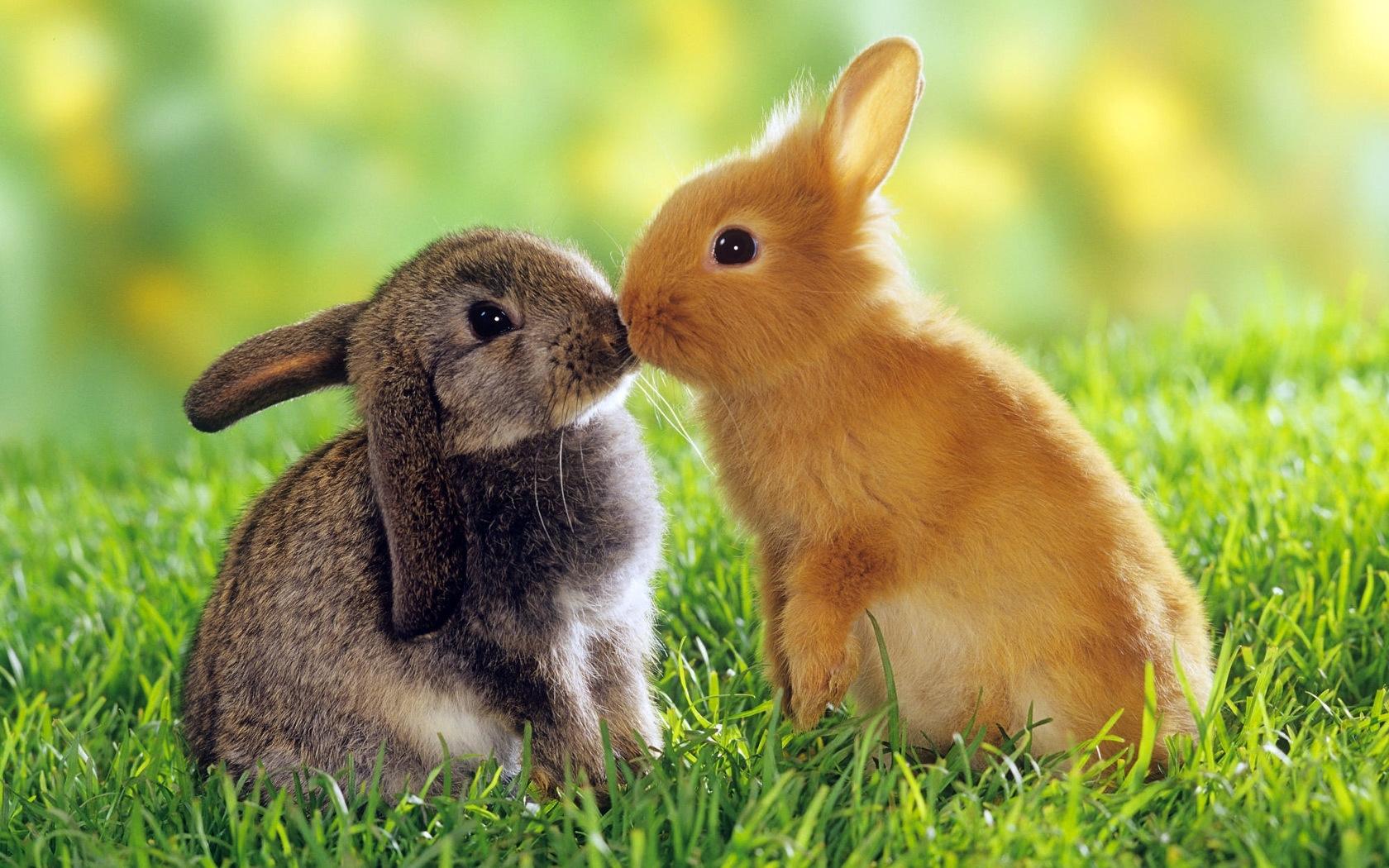 45597 Hintergrundbild herunterladen Kaninchen, Tiere - Bildschirmschoner und Bilder kostenlos